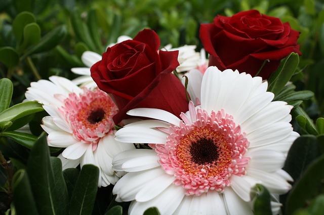 gerbera s růžema