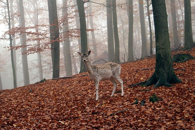 srneček v lese